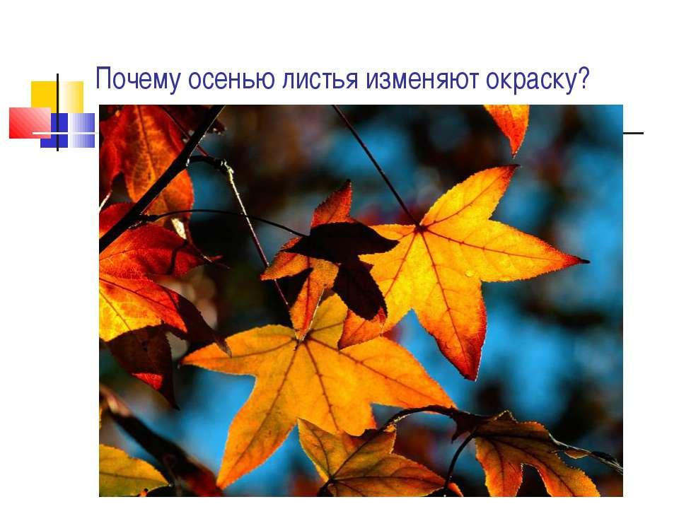 Почему осенью листья изменяют окраску?