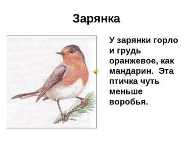 Зарянка У зарянки горло и грудь оранжевое, как мандарин. Эта птичка чуть мень...