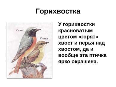 Горихвостка У горихвостки красноватым цветом «горят» хвост и перья над хвосто...