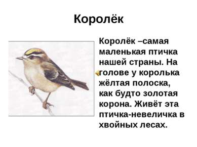 Королёк Королёк –самая маленькая птичка нашей страны. На голове у королька жё...