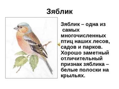 Зяблик Зяблик – одна из самых многочисленных птиц наших лесов, садов и парков...