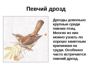 Певчий дрозд Дрозды довольно крупные среди певчих птиц. Многих из них можно у...
