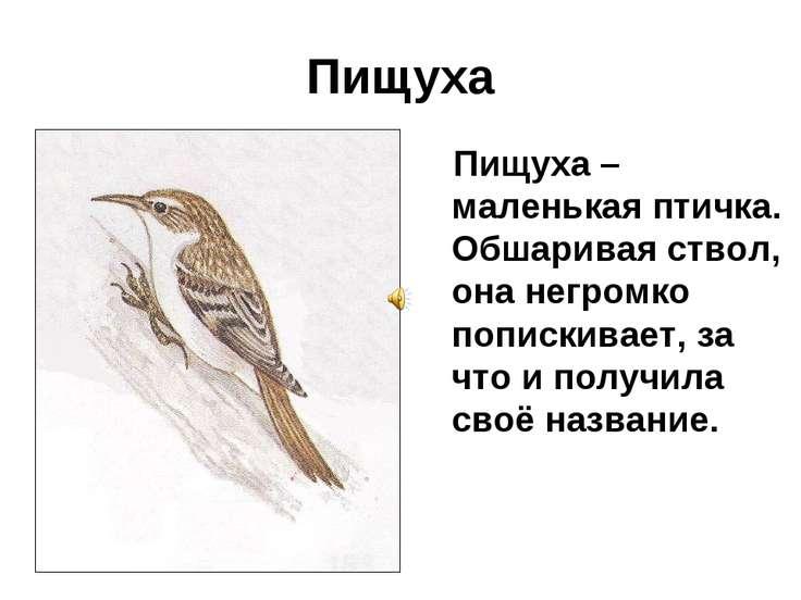 Пищуха Пищуха – маленькая птичка. Обшаривая ствол, она негромко попискивает, ...