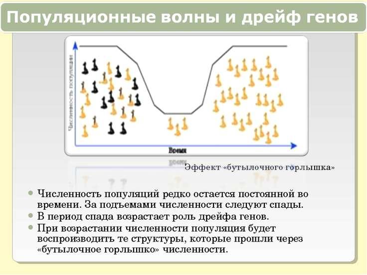 Эффект «бутылочного горлышка» Численность популяций редко остается постоянной...