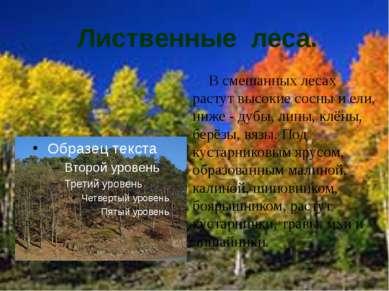 Лиственные леса. В смешанных лесах растут высокие сосны и ели, ниже - дубы, л...