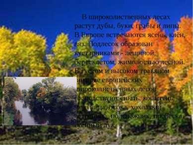В широколиственных лесах растут дубы, буки, грабы и липы. В Европе встречаютс...