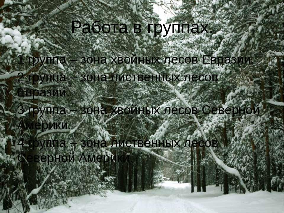 Работа в группах. 1 группа – зона хвойных лесов Евразии. 2 группа – зона лист...