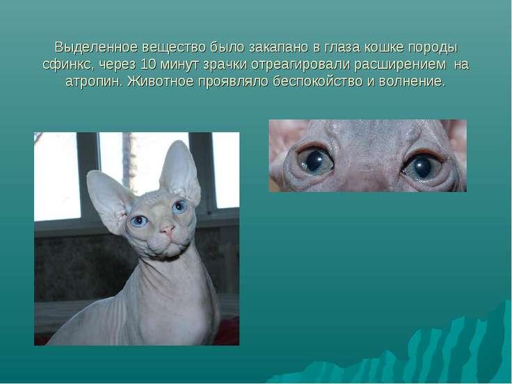 Выделенное вещество было закапано в глаза кошке породы сфинкс, через 10 минут...