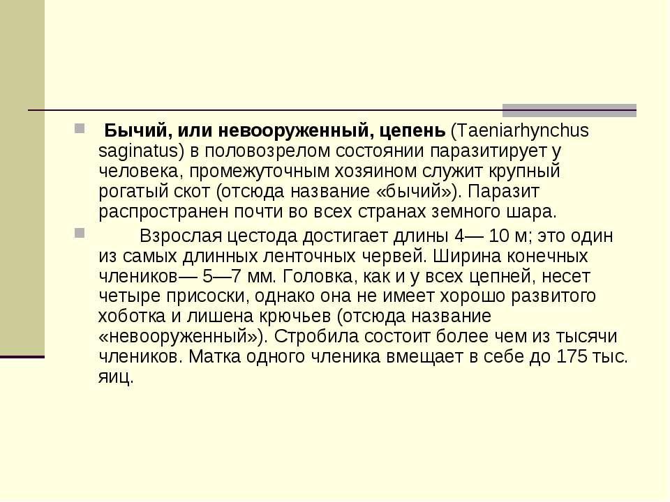 Бычий, или невооруженный, цепень(Taeniarhynchus saginatus) в половозрелом с...