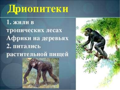 Дриопитеки 1. жили в тропических лесах Африки на деревьях 2. питались растите...