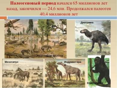 Палеогеновый период начался 65 миллионов лет назад, закончился — 24,6 млн. Пр...