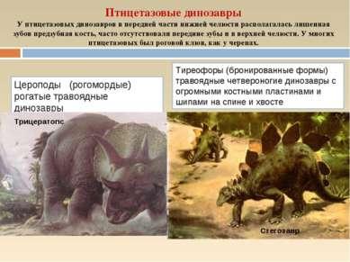 Птицетазовые динозавры У птицетазовых динозавров в передней части нижней челю...