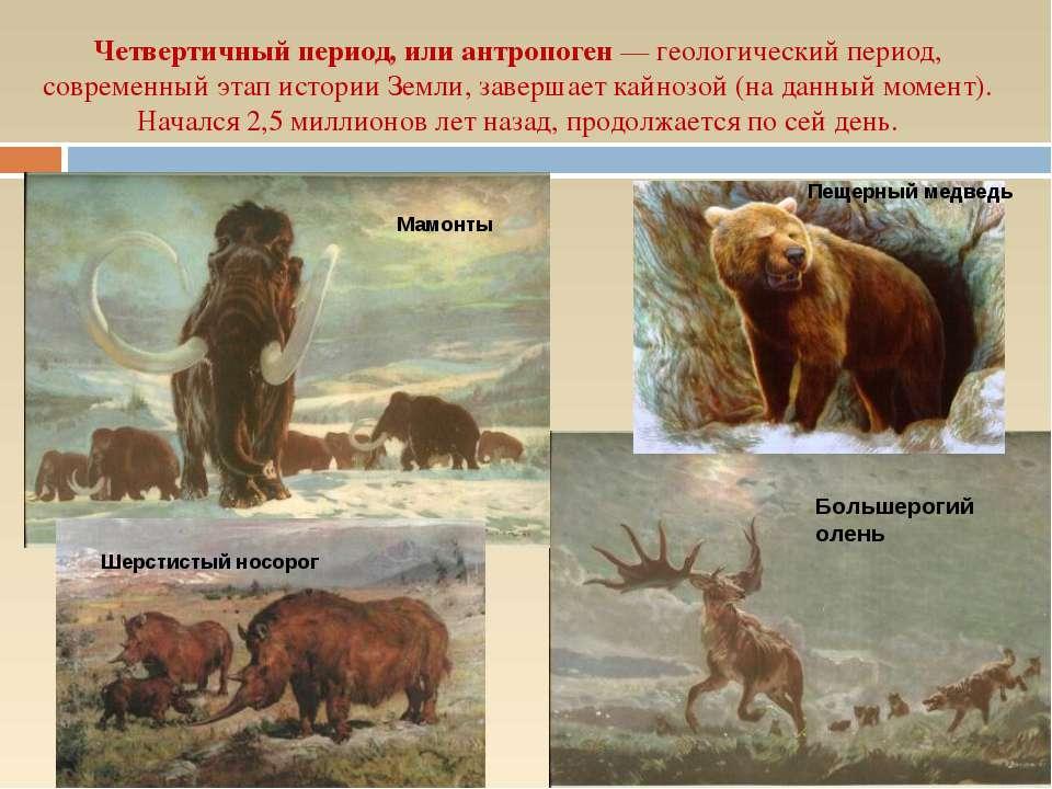 Четвертичный период, или антропоген — геологический период, современный этап ...