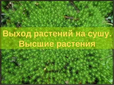 Выход растений на сушу. Высшие растения