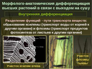 Морфолого-анатомическия дифференциация высших растений в связи с выходом на с...