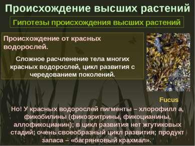 Происхождение высших растений Гипотезы происхождения высших растений Происхож...