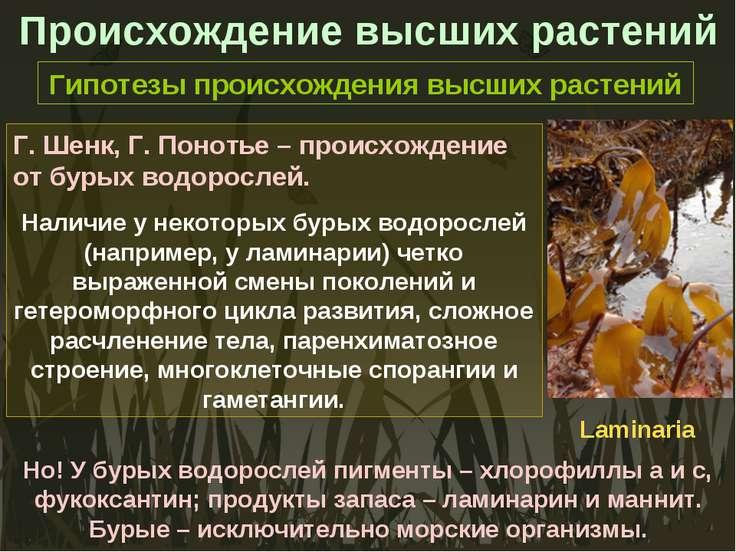 Происхождение высших растений Гипотезы происхождения высших растений Г. Шенк,...