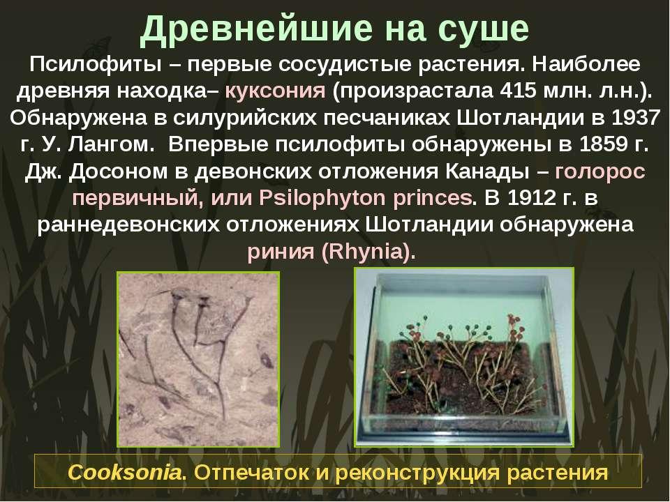Древнейшие на суше Псилофиты – первые сосудистые растения. Наиболее древняя н...