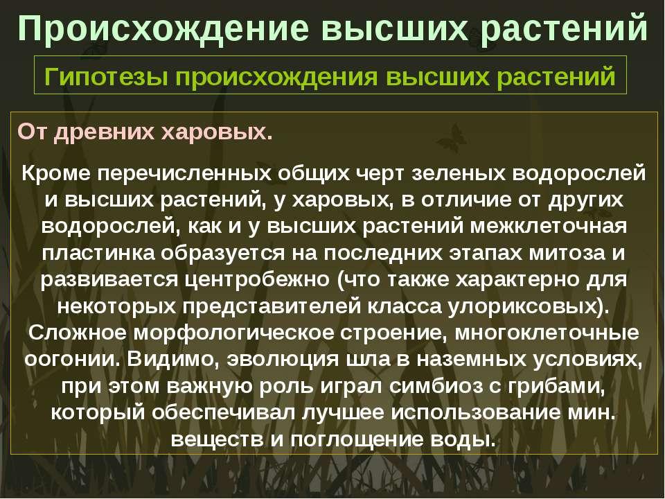 Происхождение высших растений Гипотезы происхождения высших растений От древн...