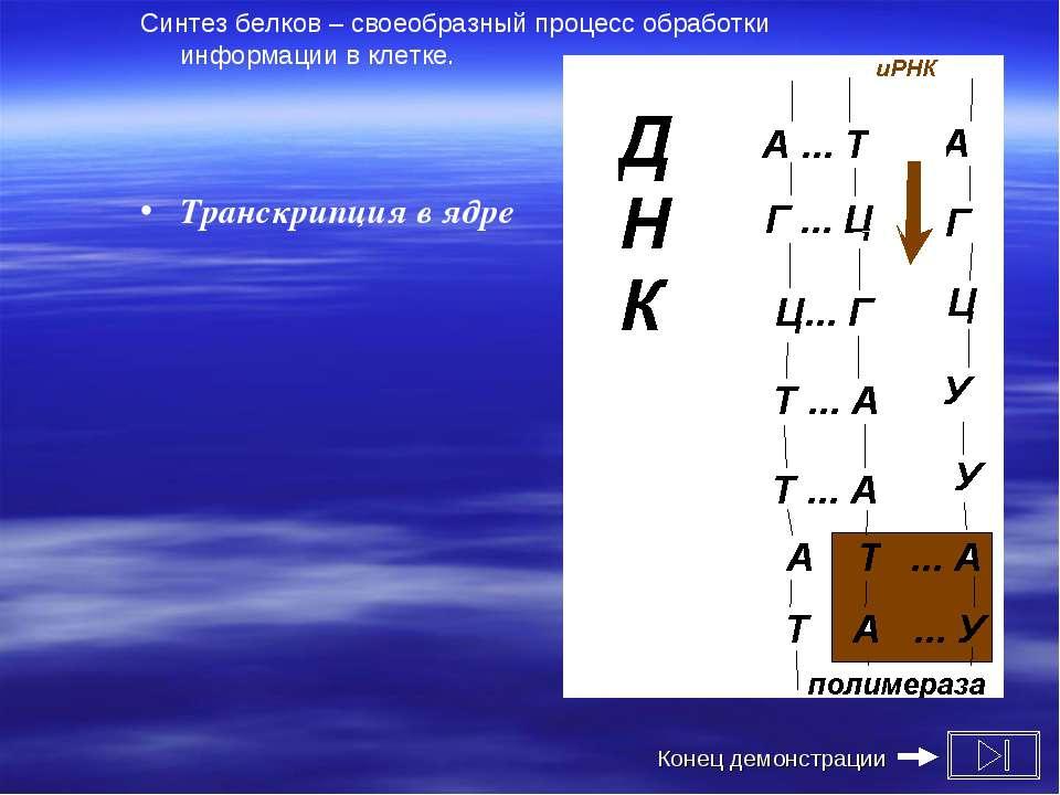 Синтез белков – своеобразный процесс обработки информации в клетке. Транскрип...