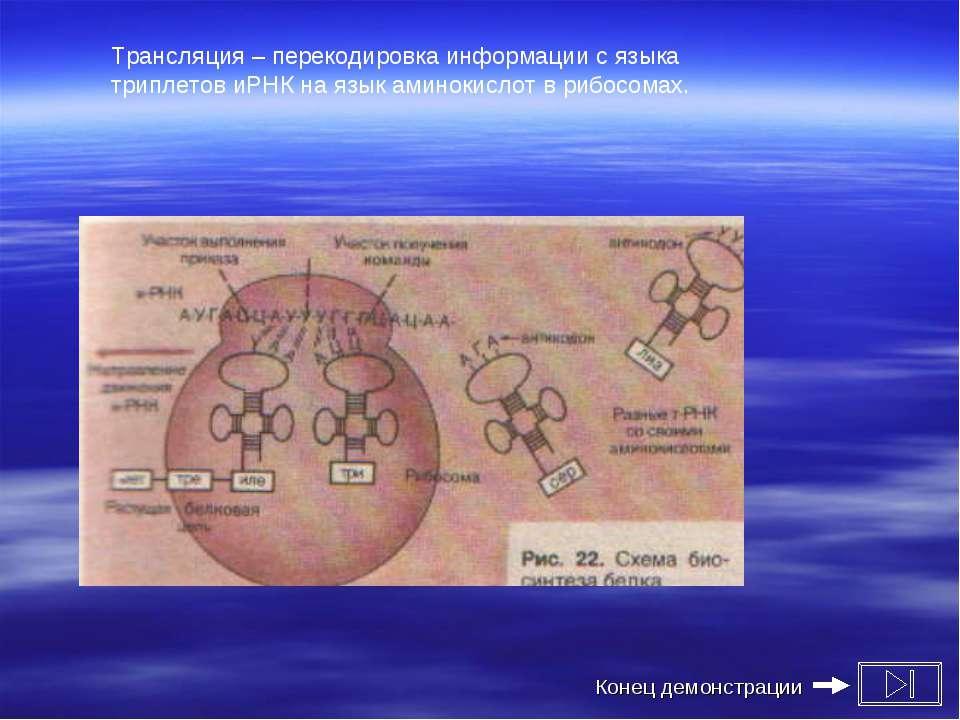 Трансляция – перекодировка информации с языка триплетов иРНК на язык аминокис...
