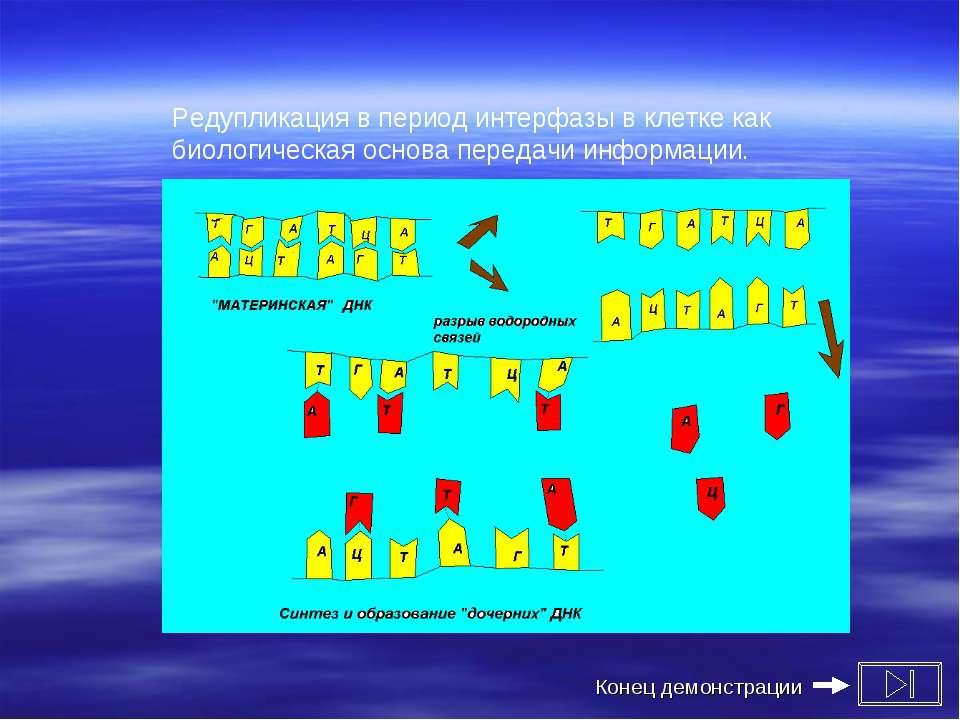Редупликация в период интерфазы в клетке как биологическая основа передачи ин...