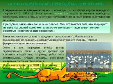Национальные и природные парки – новая для России форма охраны природных терр...