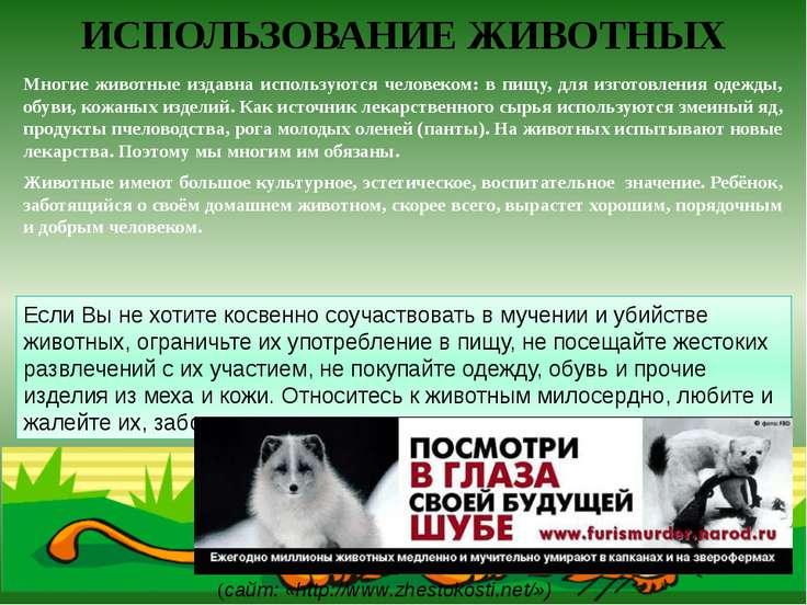 ИСПОЛЬЗОВАНИЕ ЖИВОТНЫХ Многие животные издавна используются человеком: в пищу...