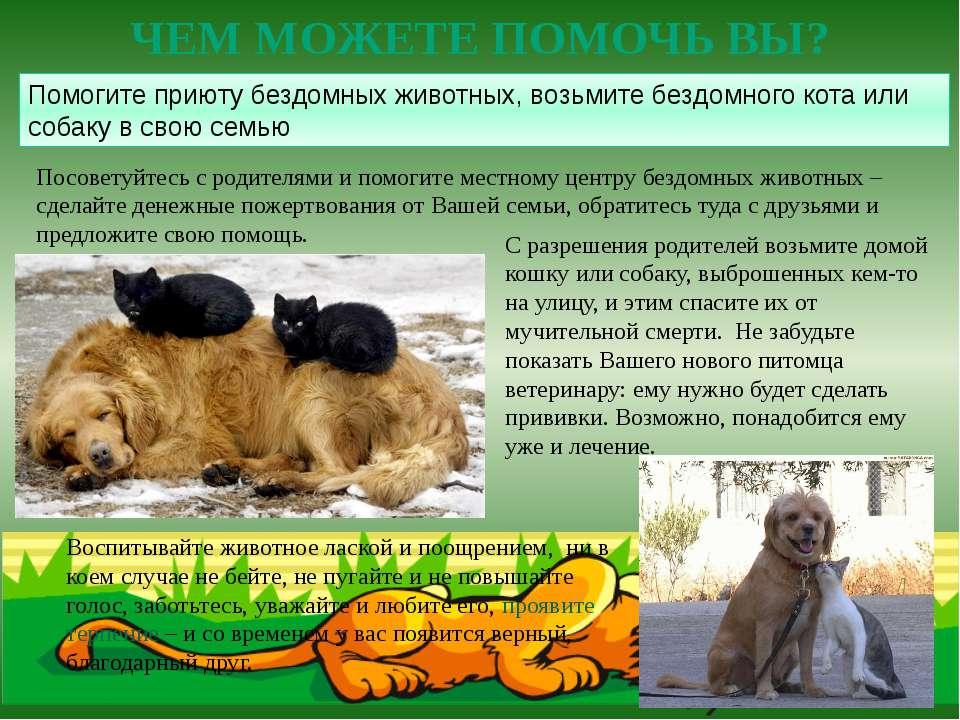 Посоветуйтесь с родителями и помогите местному центру бездомных животных –сде...