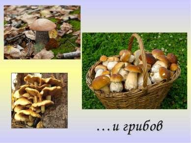 …и грибов