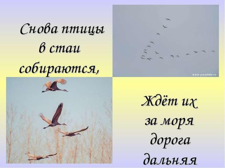 Снова птицы в стаи собираются, Ждёт их за моря дорога дальняя