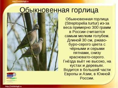Обыкновенная горлица Обыкновенная горлица (Streptopelia turtur) из-за веса пр...