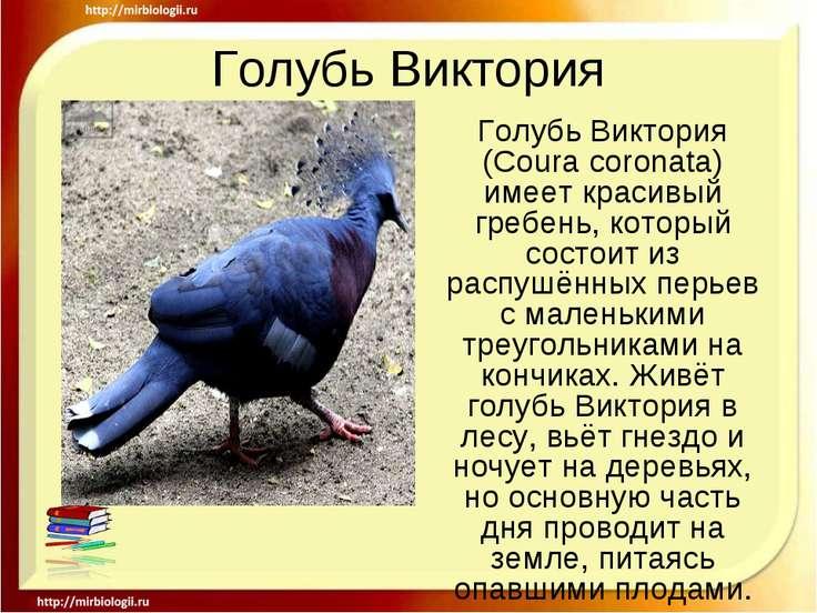 Голубь Виктория Голубь Виктория (Coura coronata) имеет красивый гребень, кото...