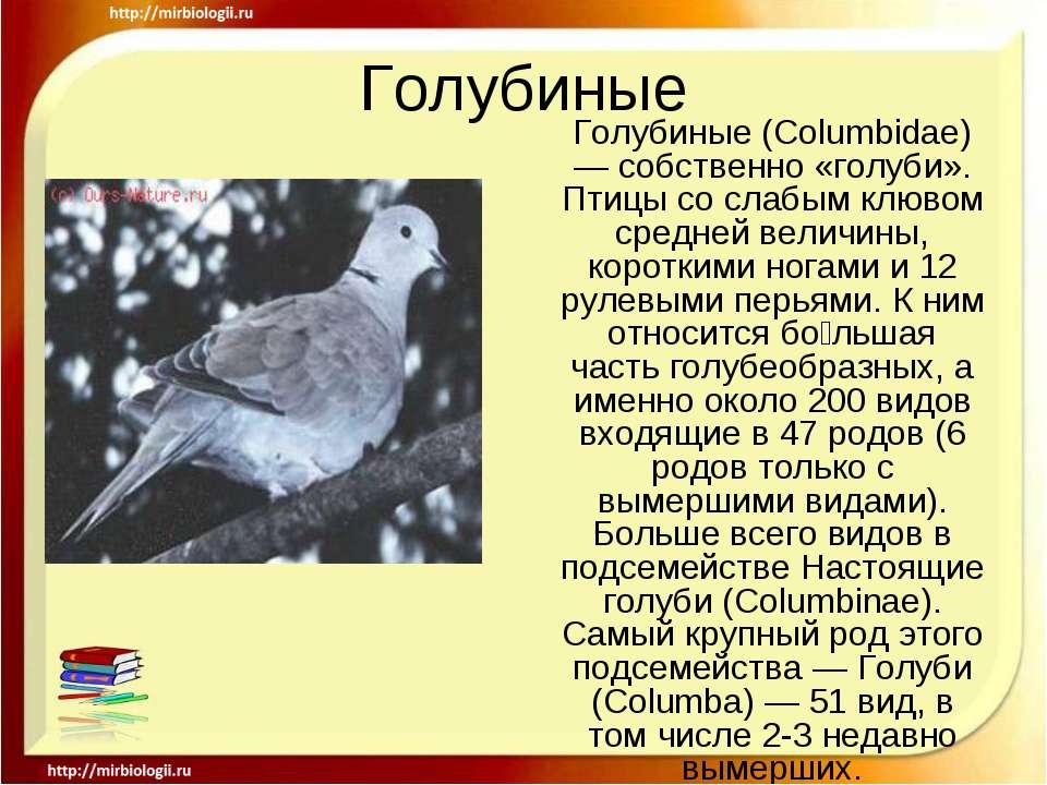 Голубиные Голубиные (Columbidae) — собственно «голуби». Птицы со слабым клюво...