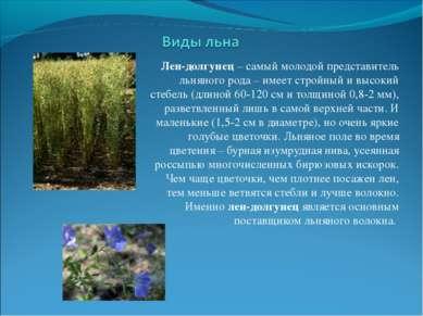 Лен-долгунец – самый молодой представитель льняного рода – имеет стройный и в...