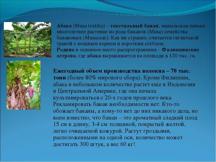 Абака (Musa textilis) – текстильный банан, манильская пенька – многолетнее ра...