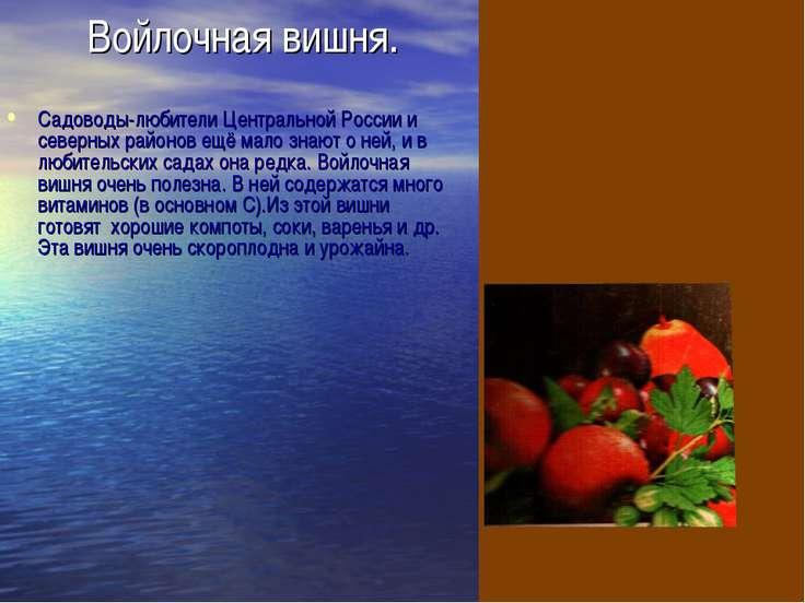 Войлочная вишня. Садоводы-любители Центральной России и северных районов ещё ...