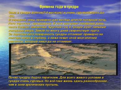 Времена года в тундре Зима в тундре долгая(7-8 месяцев) и очень суровая(мороз...