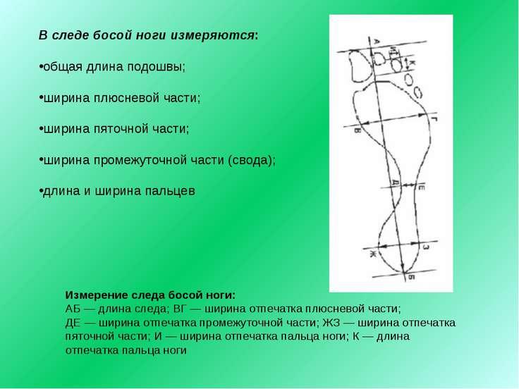 В следе босой ноги измеряются: общая длина подошвы; ширина плюсневой части; ш...