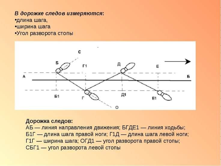 В дорожке следов измеряются: длина шага, ширина шага Угол разворота стопы Дор...