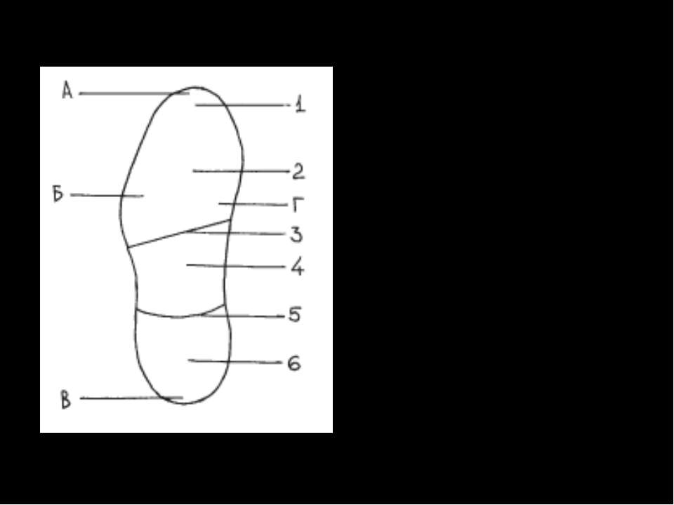 Подошва обуви: 1 — носок; 2 — подметка; 3 — задний край подметки; 4 — промежу...