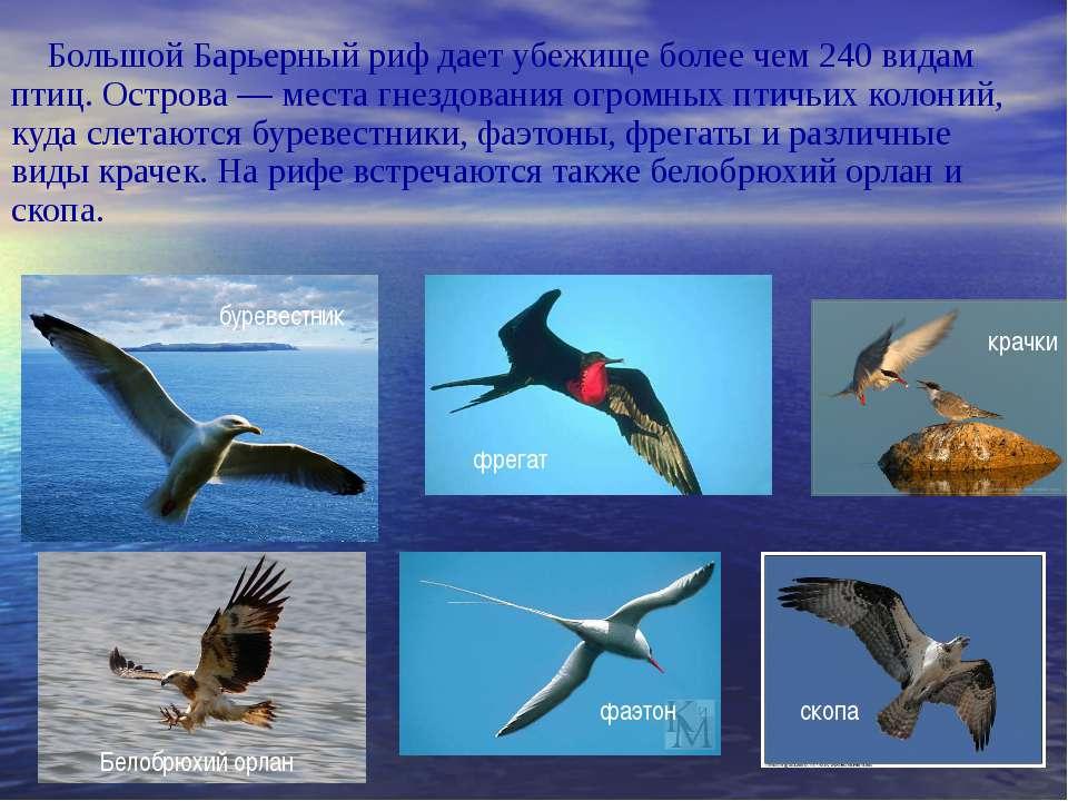 Большой Барьерный риф дает убежище более чем 240 видам птиц. Острова — места ...