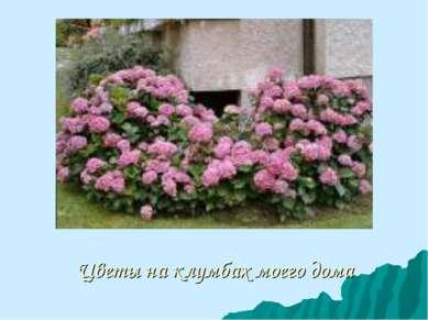 Цветы на клумбах моего дома