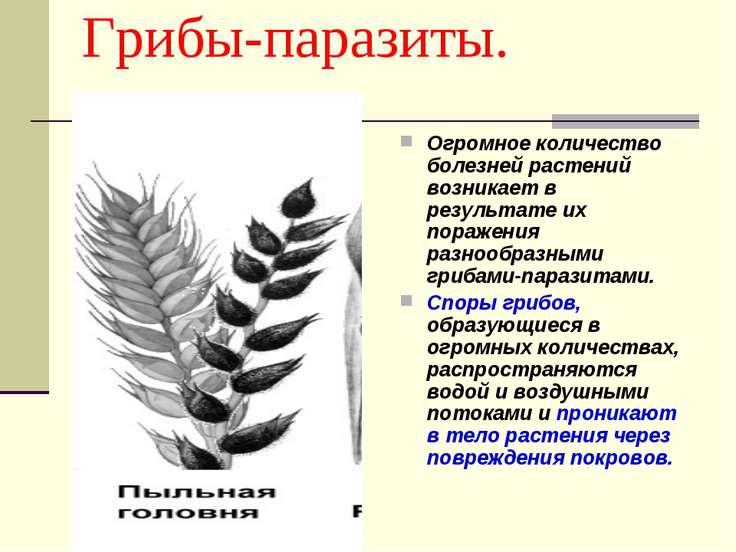 Грибы-паразиты. Огромное количество болезней растений возникает в результате ...