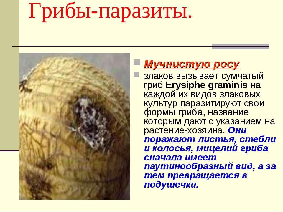 овес от паразитов