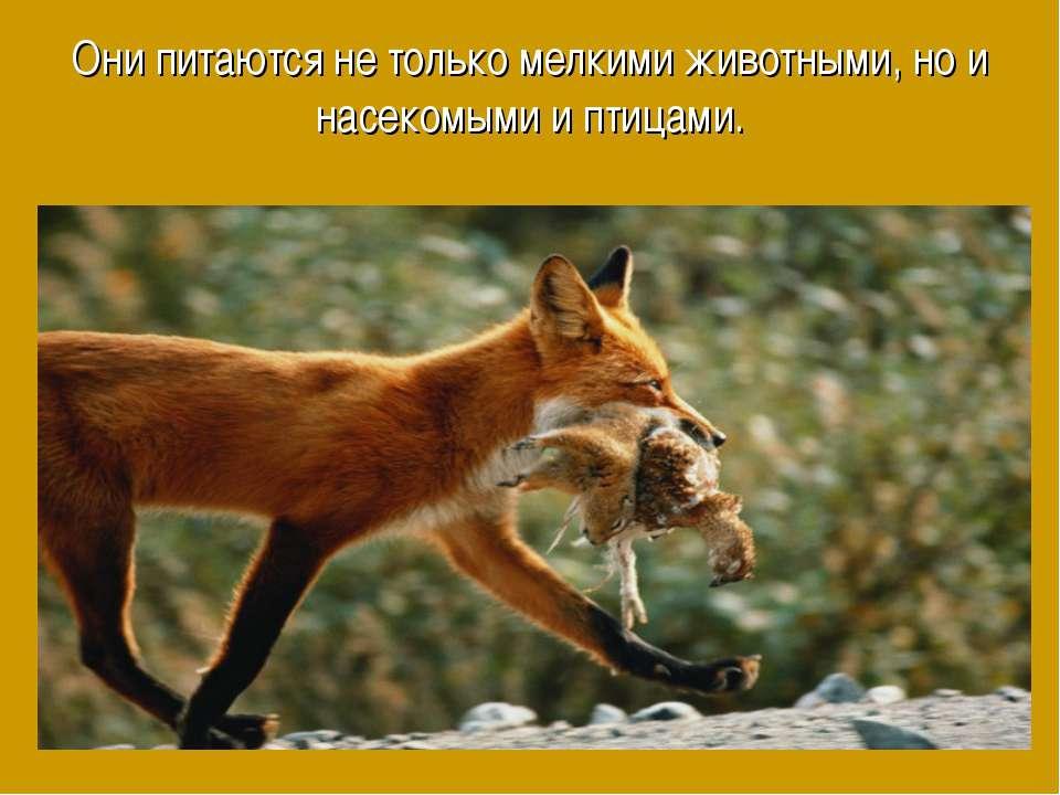 Они питаются не только мелкими животными, но и насекомыми и птицами.
