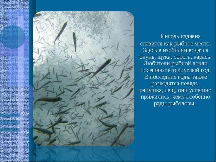 Инголь издавна славится как рыбное место. Здесь в изобилии водятся окун...