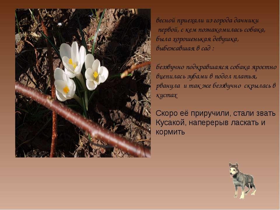 весной приехали из города дачники первой, с кем познакомилась собака, была хо...