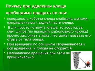 * Почему при удалении клеща необходимо вращать по оси: поверхность хоботка кл...