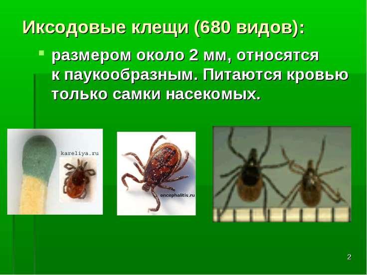 * Иксодовые клещи (680 видов): размером около 2 мм, относятся кпаукообразным...